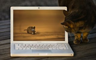 Что делать, если MacBook завис — разные способы решения проблемы